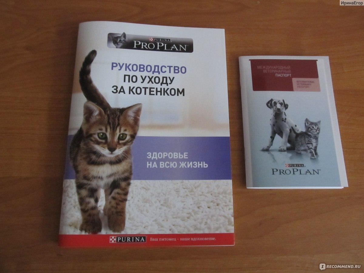 Бесплатные подарки по почте для котят в Усть-Улагане,Хомутовке,Велегоже