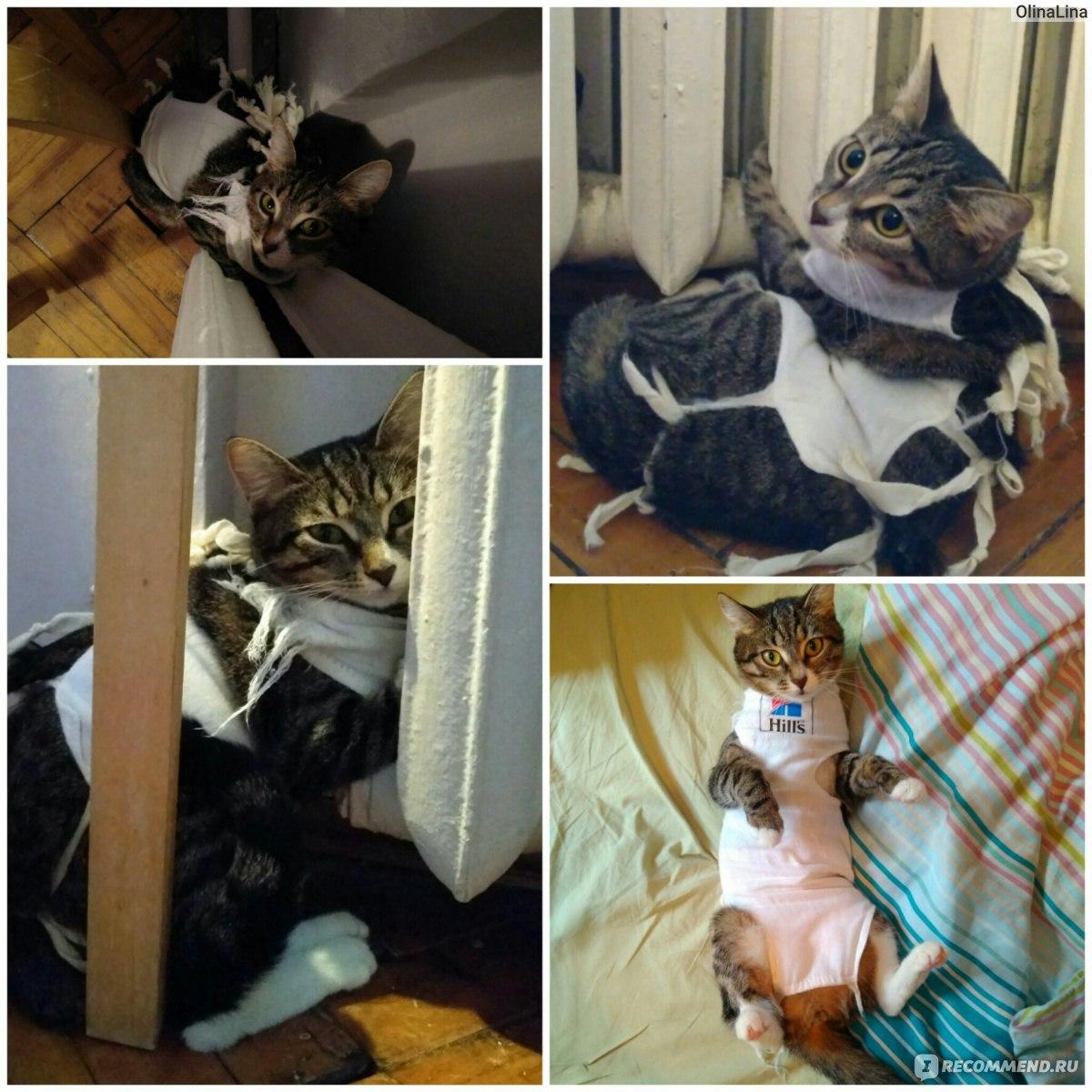 Послеоперационная попона (бандаж) для кошки - выкройка 30
