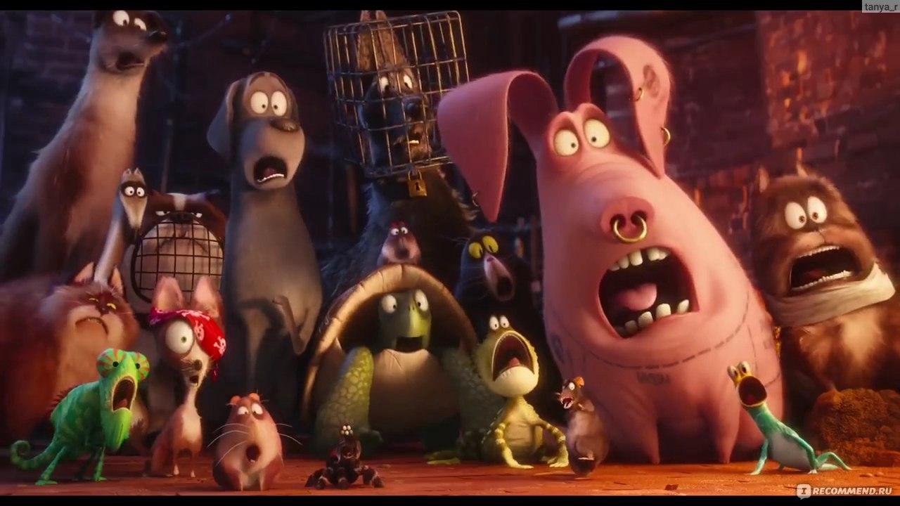 бани сауны торрент мультфильма поросёнок качество ави двоих