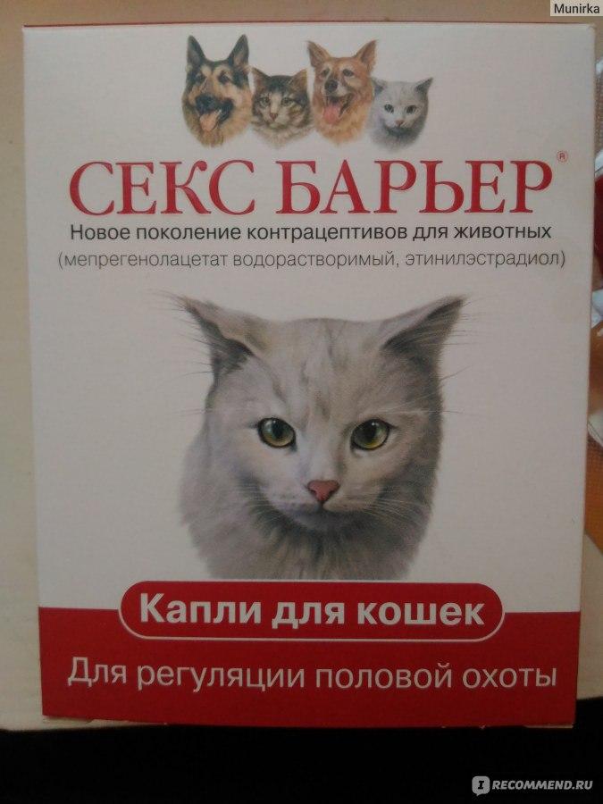 Секс барьер для британских котов