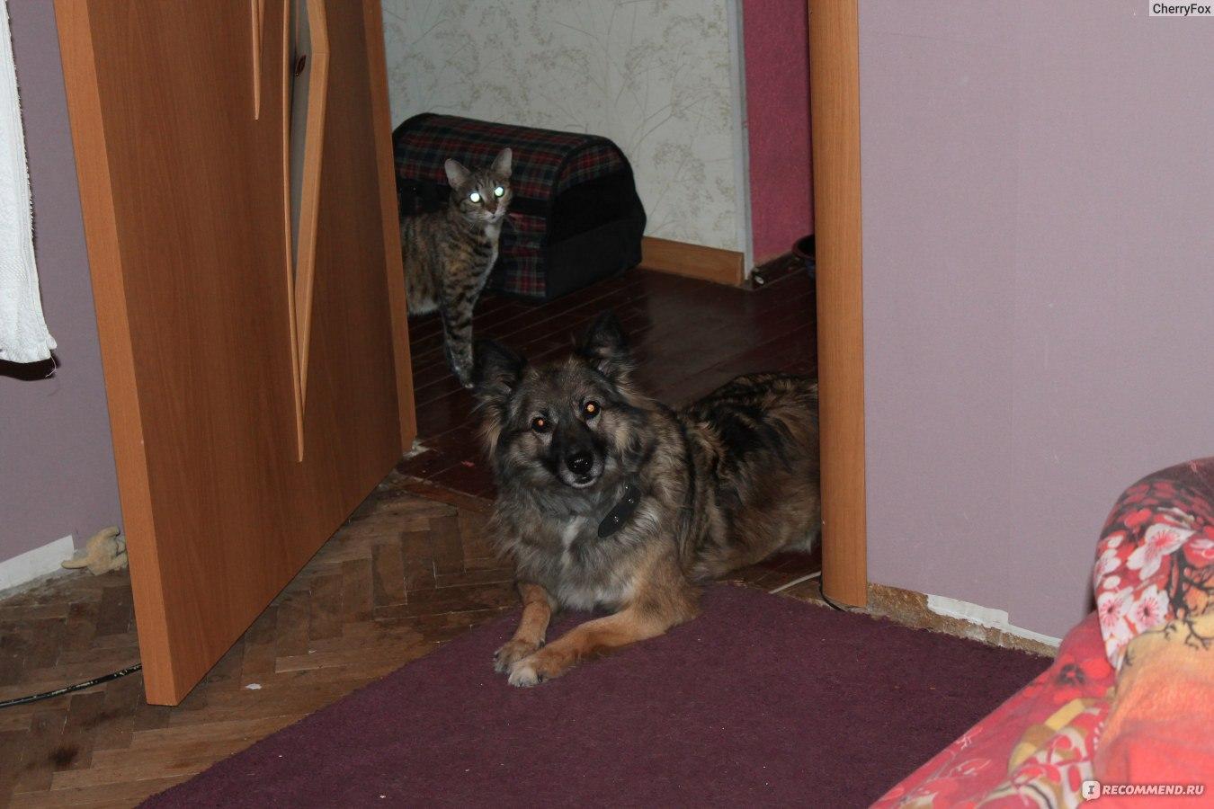 знакомство с кошкой и собакой занятие