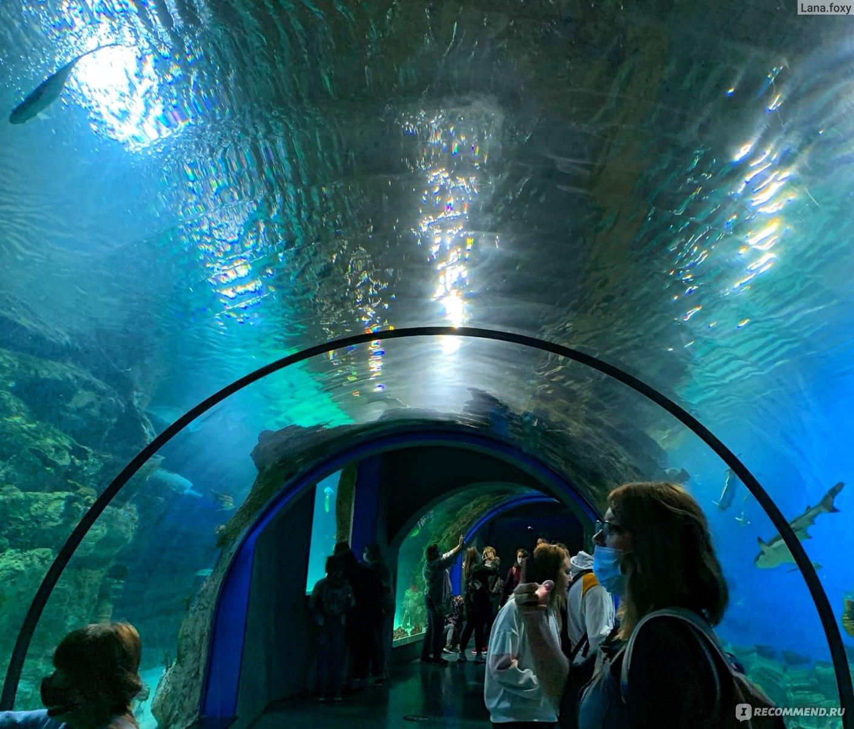 торможения можно ли фотографировать в океанариуме на вднх решено работать