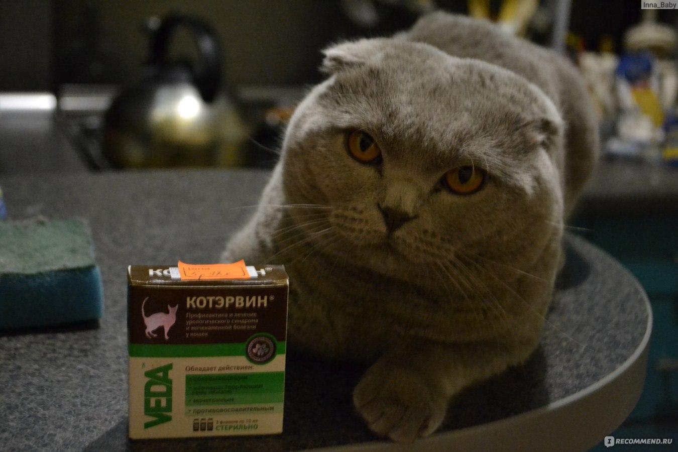 Схема лечения мкб у котов