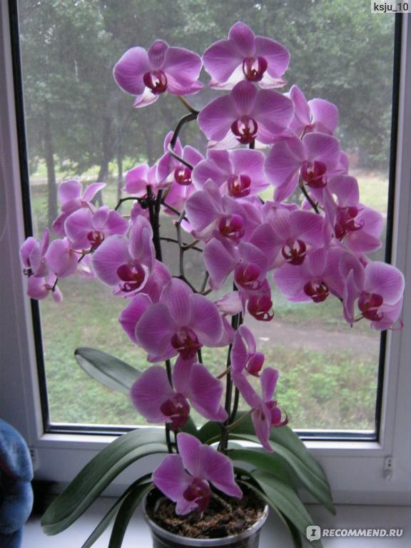 Орхидея с мелкими цветами название