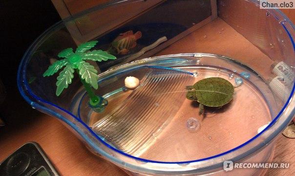 Уход за водяными черепахами красноухими в домашних условиях 449