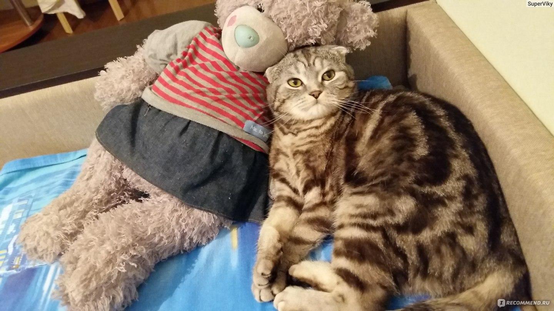 Коты вкусно пахнут