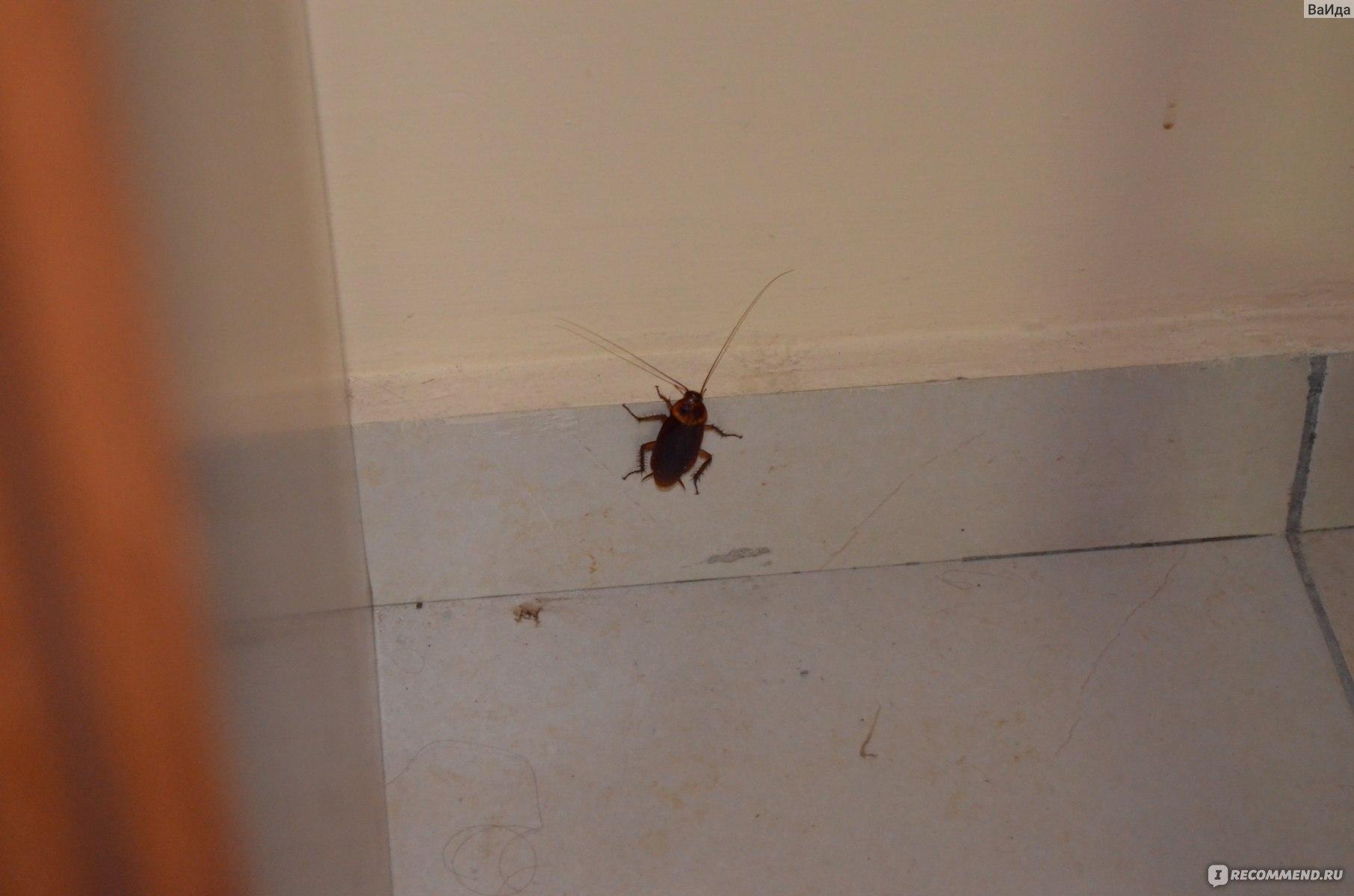 умолчанию фотограф тараканы на кипре фото туристов новая
