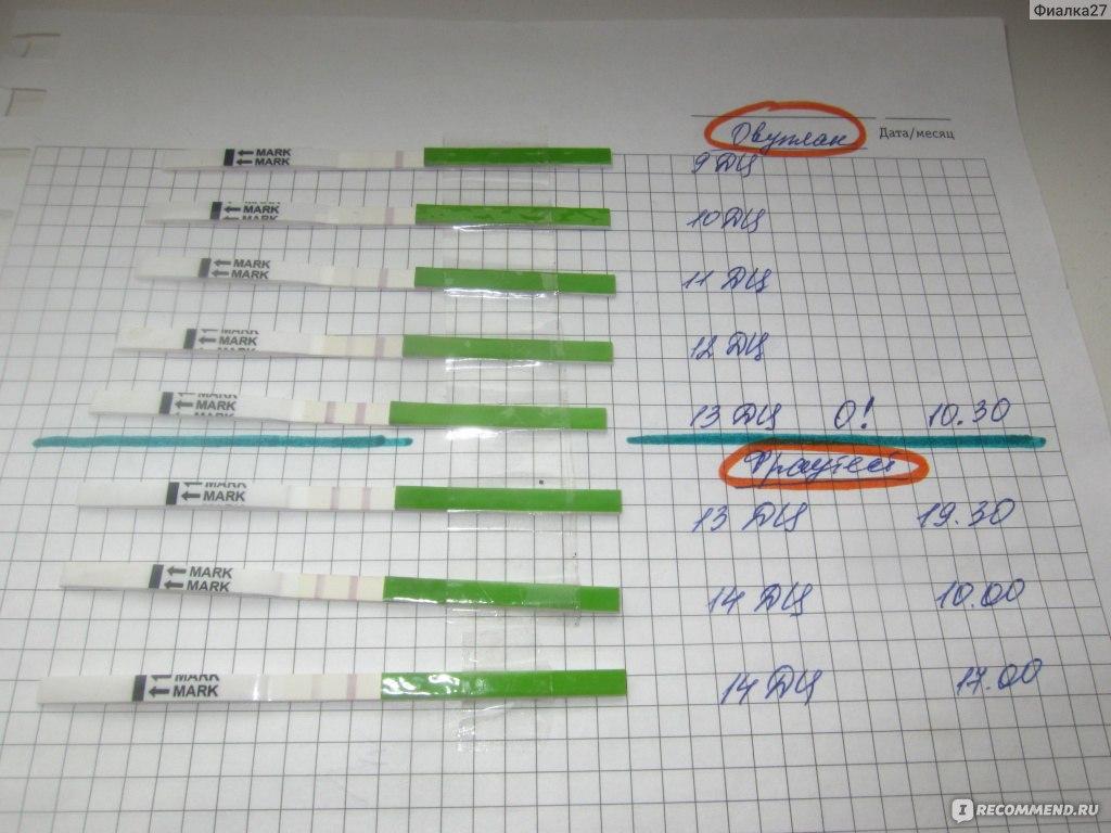 Самый дешевый тест на овуляцию «Клевер» (Фото примеры