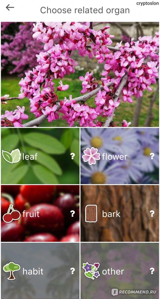 Определение растений по фото приложение