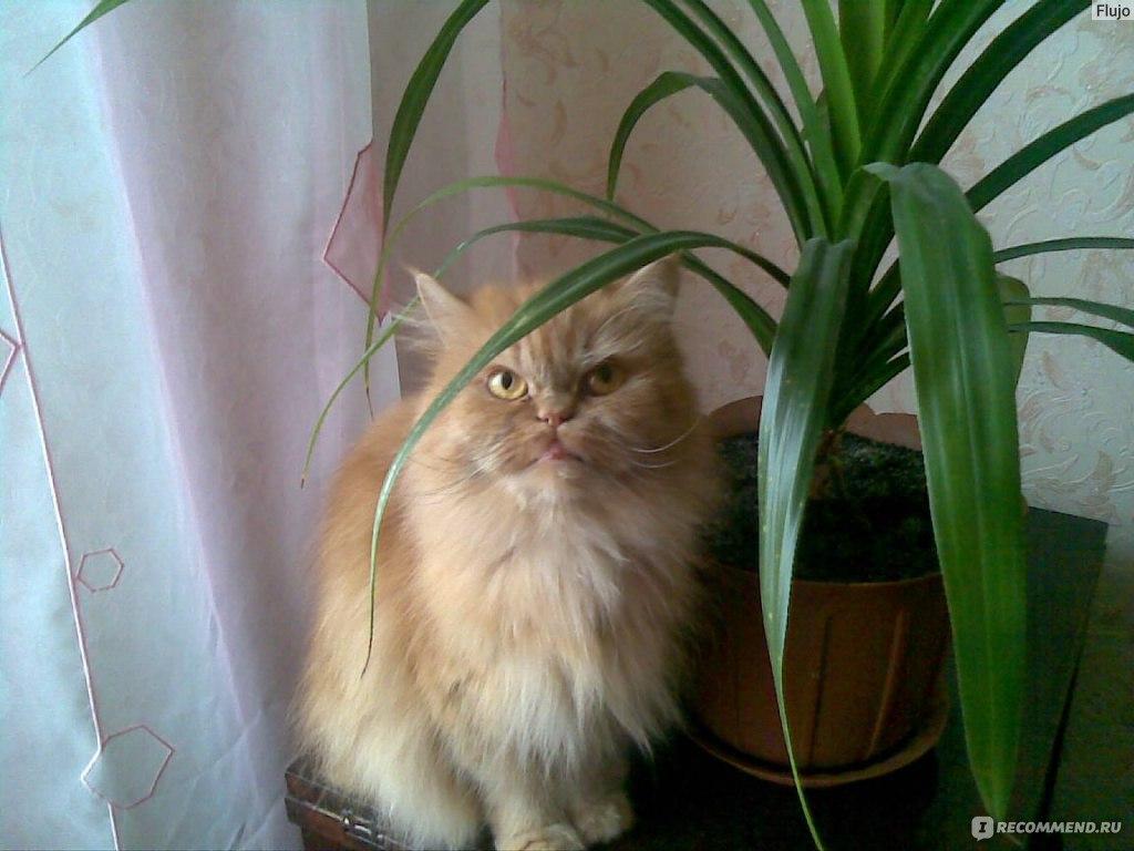 Лечение атонии мочевого пузыря у кота