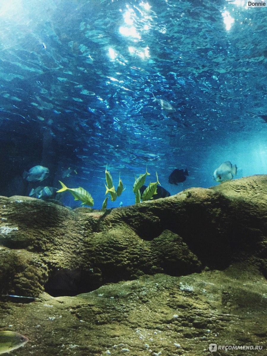 человеческий разум океанариум в даляне фото если сообщите