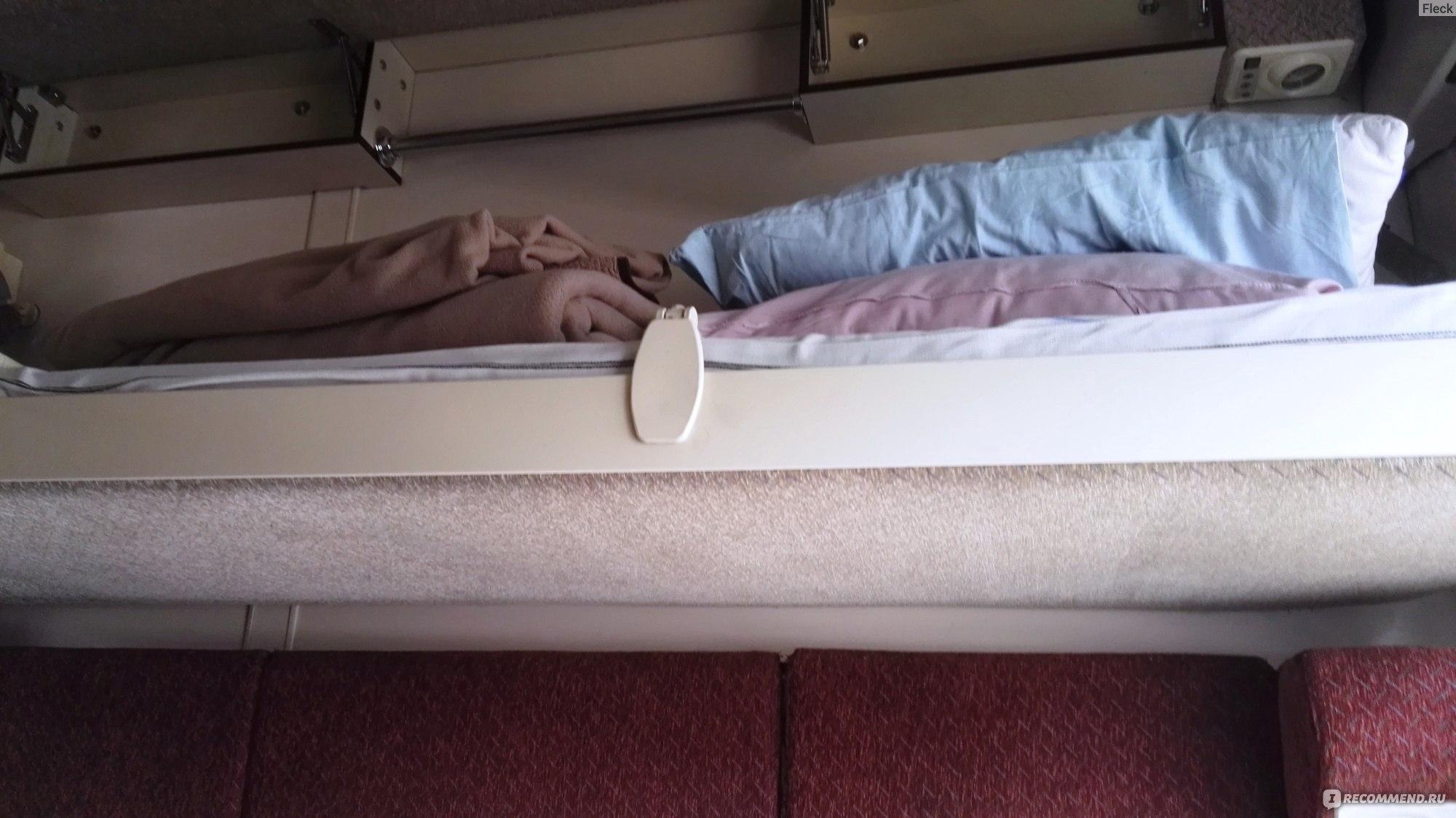 солнечные поезд кисловодск спб фото ветка ели