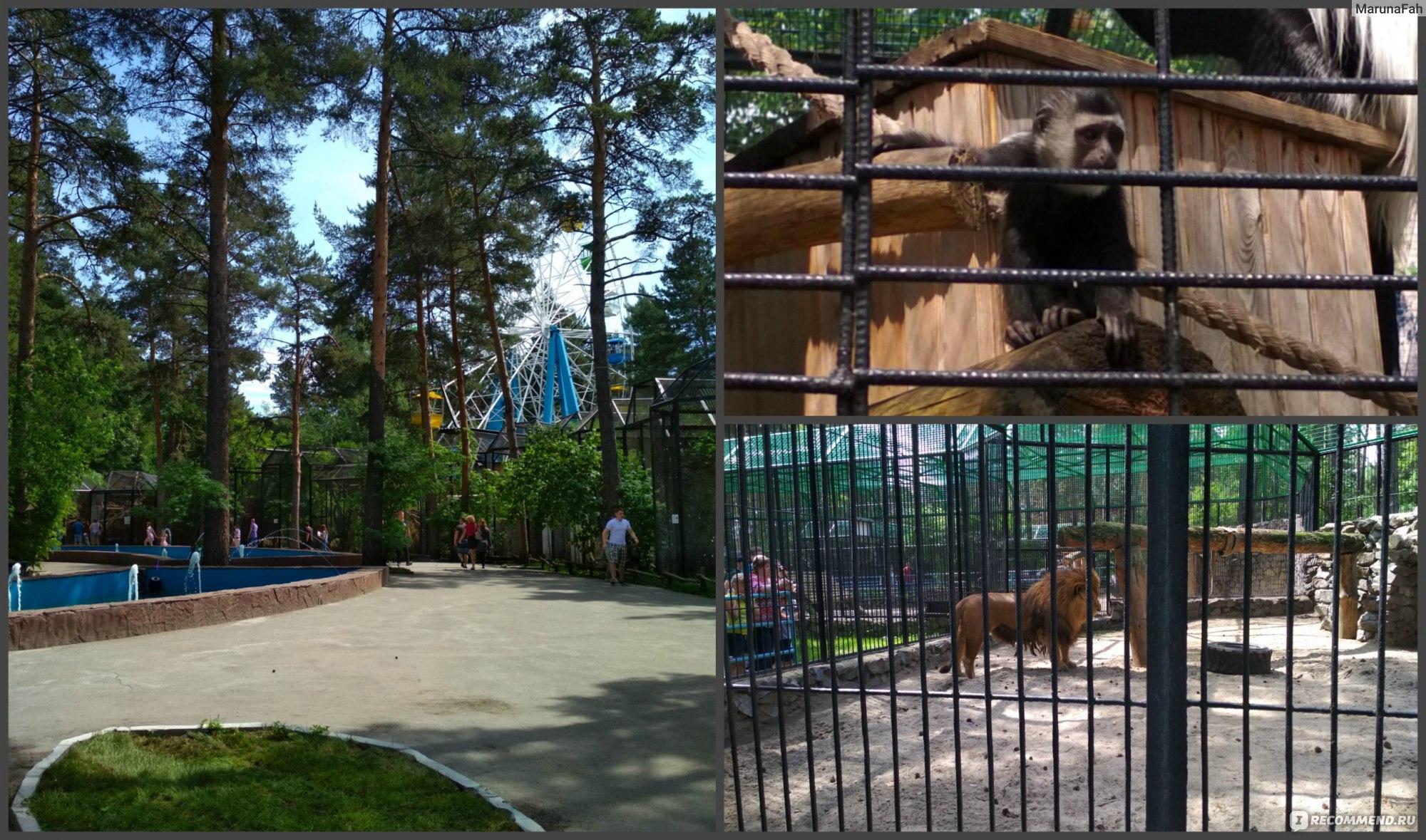 какое место занимает новосибирский зоопарк