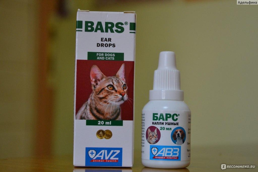 отели Ниме капли в уши кошкам от клещей идеи