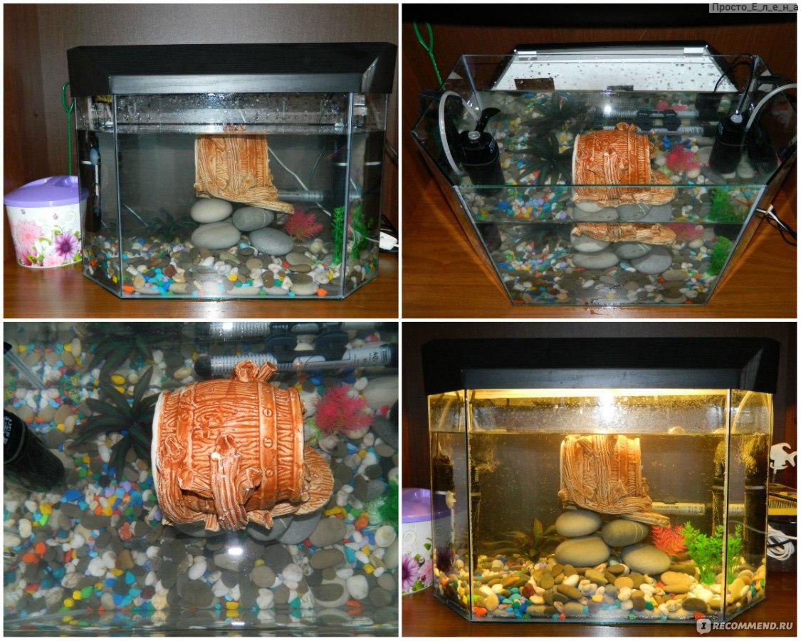 Островок для красноухой черепахи своими руками из подручных материалов фото 5