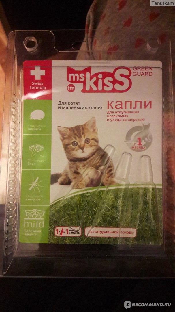 Существует хорошее средство по избавлению от блох у кота с помощью чеснока, которое подойдет и для маленьких котят.