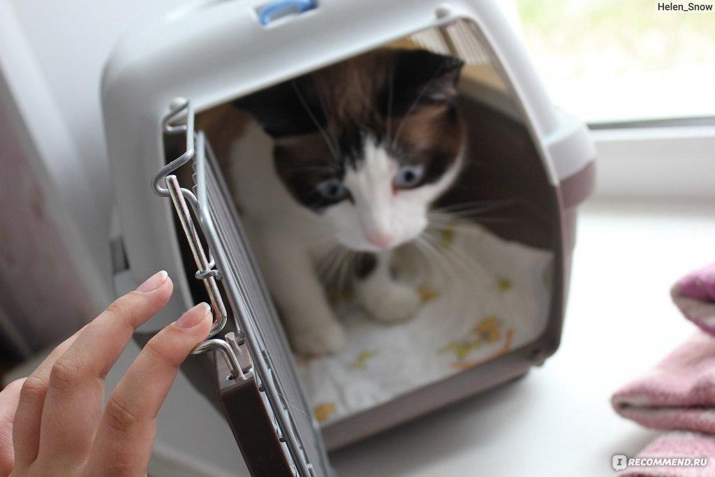 Image result for кошка в переноске