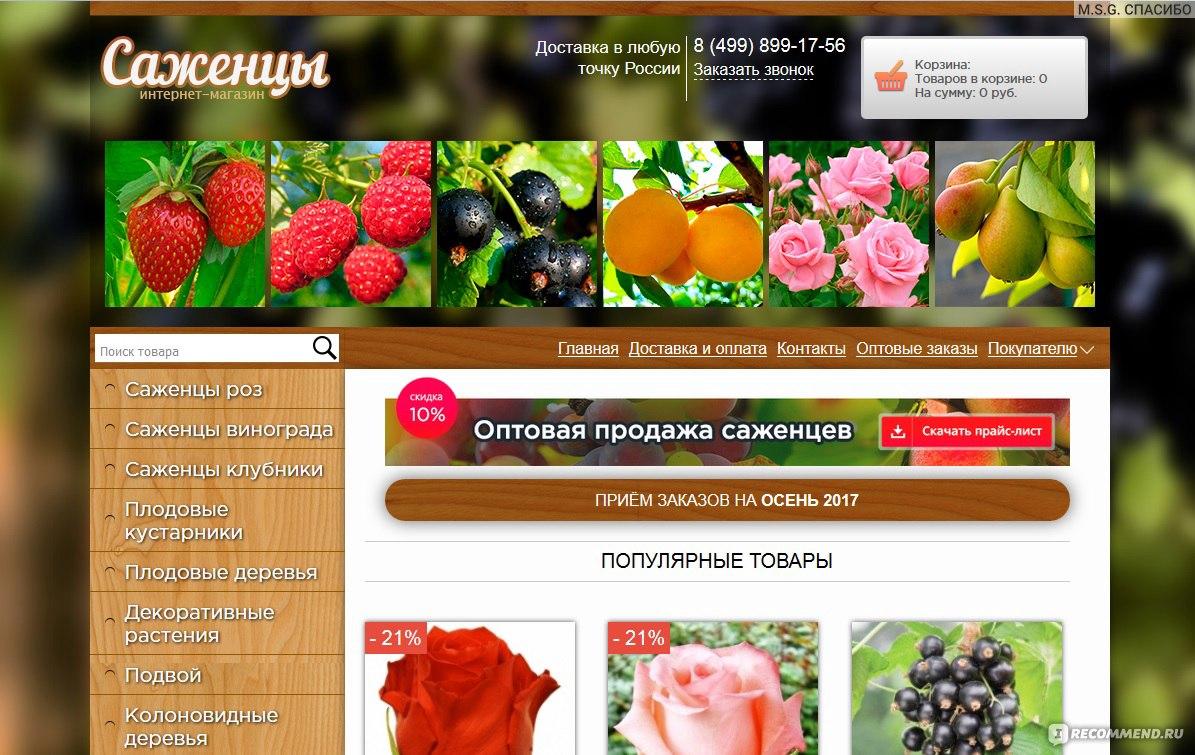 Отзывы О Интернет Магазинах Саженцев Роз