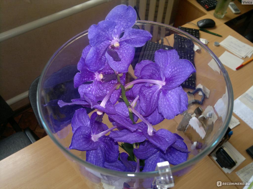 Цены на цветы розы минск