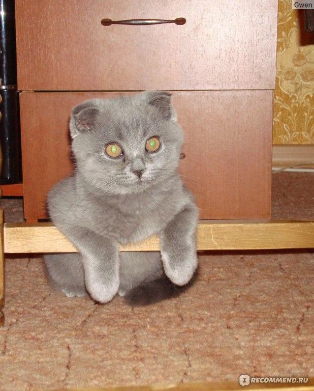 Что делать если кот вредный