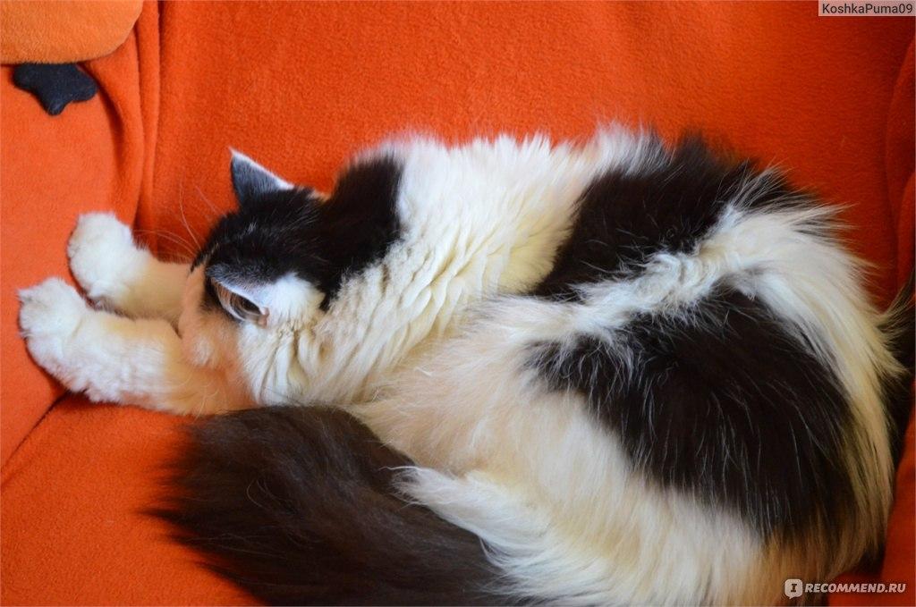 Кот ест дыню это нормально