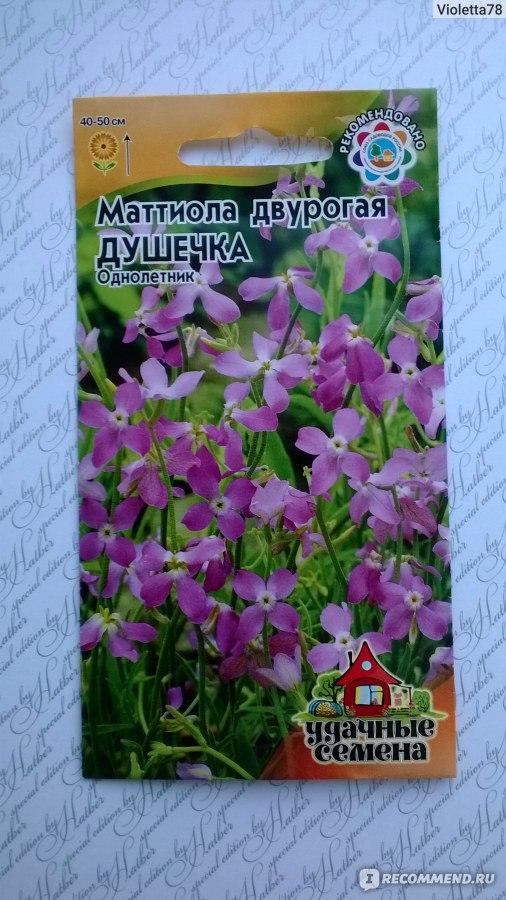 Маттиола двурогая. Выращивание из семян маттиолы двурогой