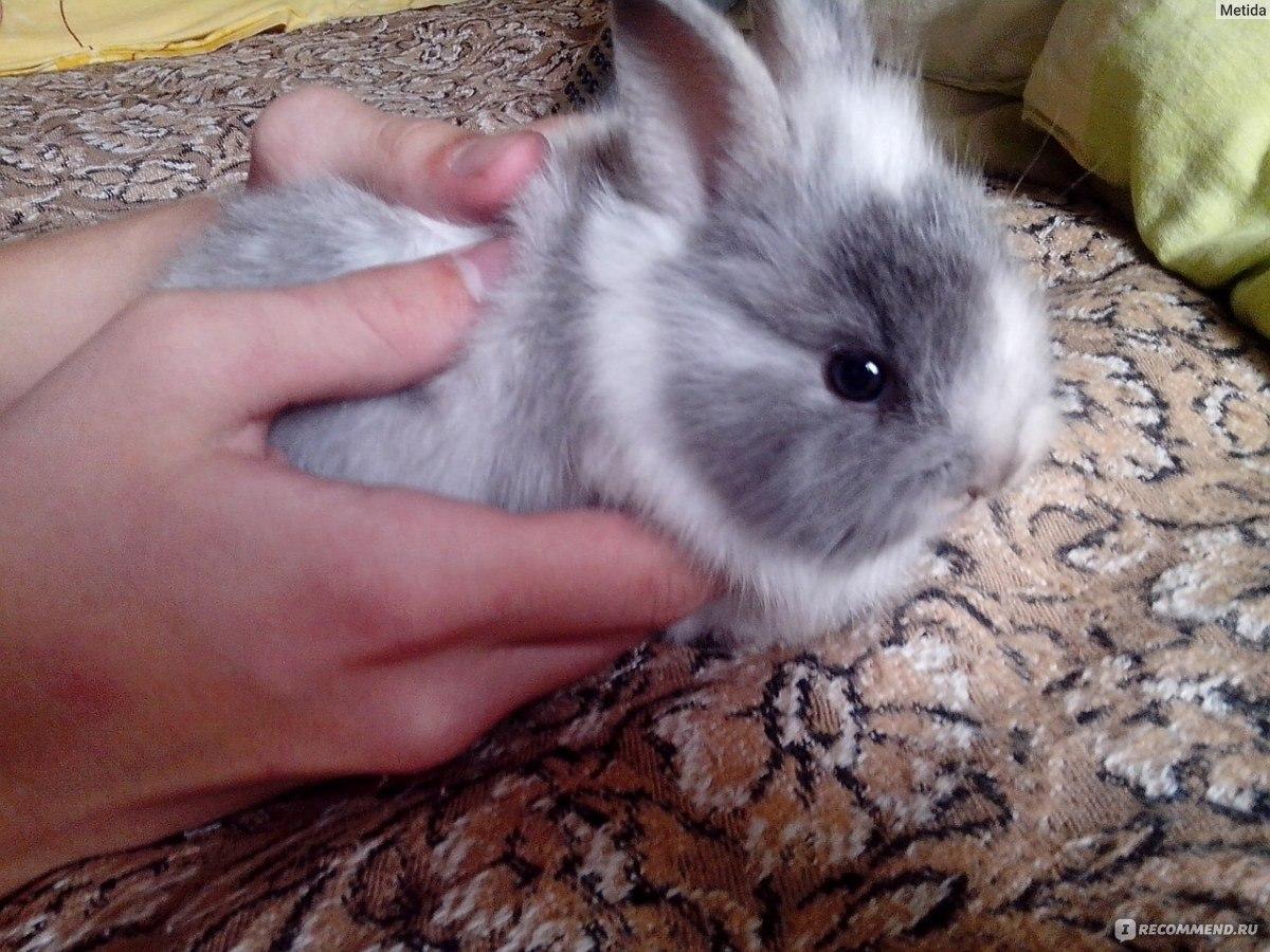 Как приготовить кролика чтобы мясо было мягким и сочным 29