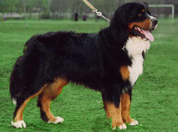 собака из букиных фото