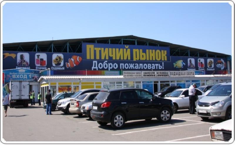Птичий рынок, Москва фото