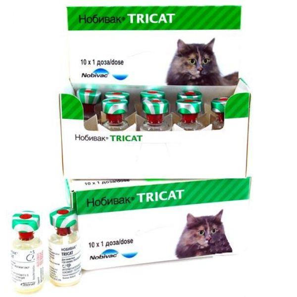 нобивак трикет для котят