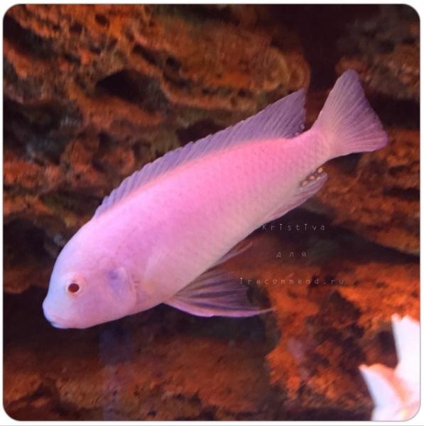 Aquarium Fish Paradise  Adelaide SA  Aquarium shop in