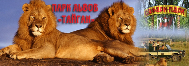 Картинки по запросу парк львов тайган