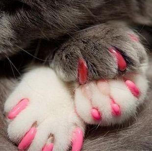 Кошки для ногтей фото
