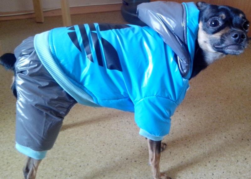 Купить одежду для собаки алиэкспресс