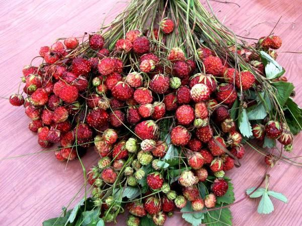 Клубника фото ягода лесная