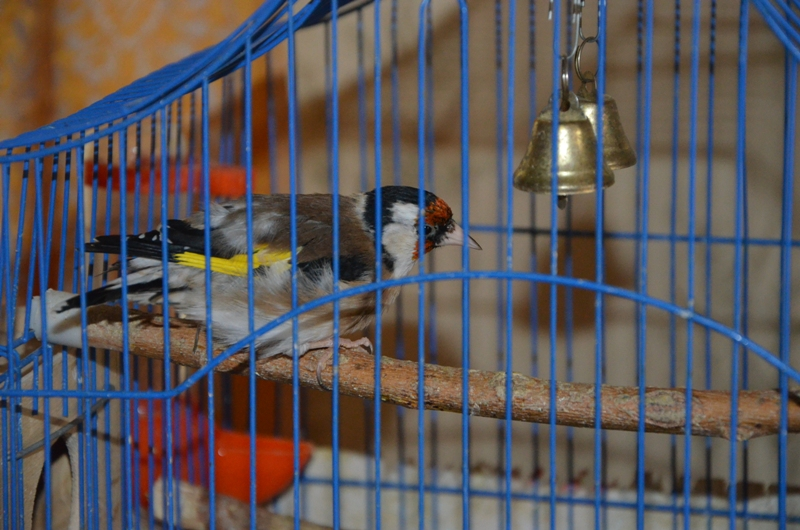 Сонник птиц в клетку сажать 32