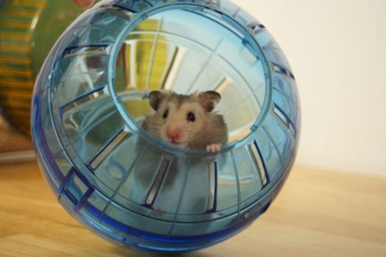 Cat Toy Spinning Wheel