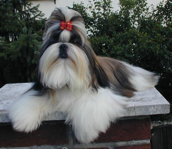 Стрижка собак реклама фото