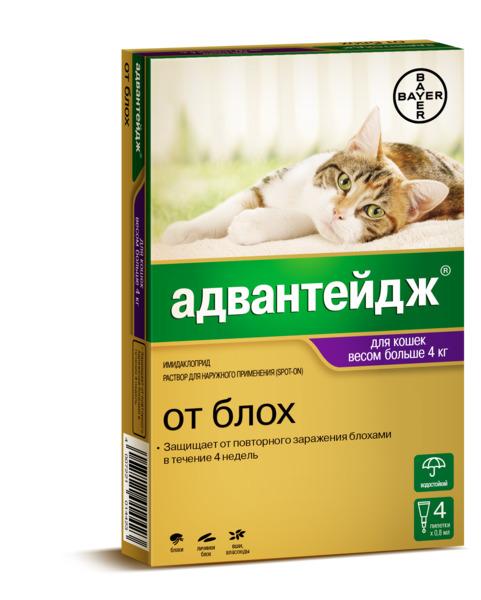 адвантейдж для кошек отзывы ветеринаров