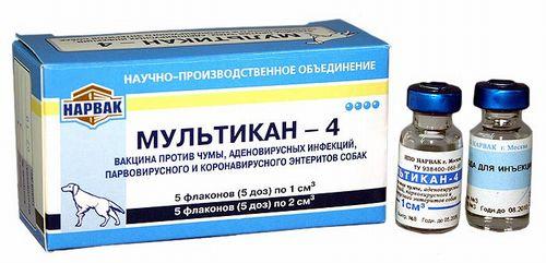 Как сделать прививку собаке мультикан 8
