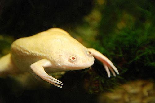 желтая лягушка в аквариуме