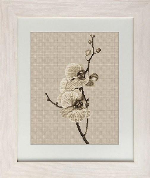 Фирмы орхидея вышивка