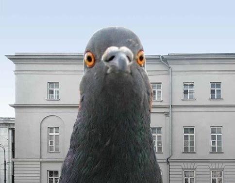 симулятор голубя скачать на компьютер