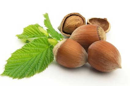 Саженцы ореха Орехоплодный питомник 32
