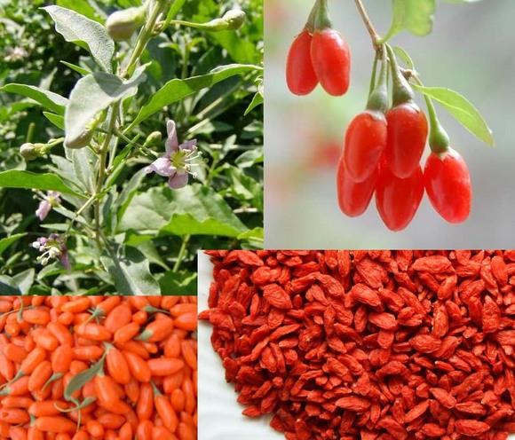 ягоды годжи для похудения отзывы и результаты